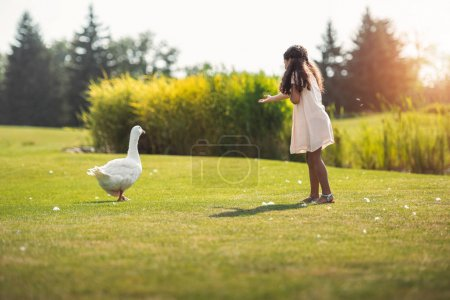 girl feeding geese in park