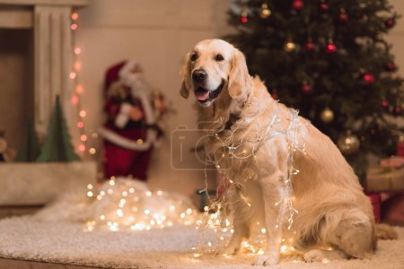 Golden retriever dog in garland