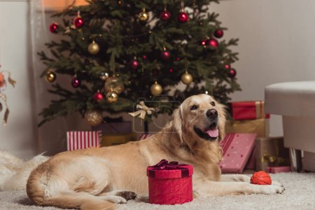 golden retriever dog at christmas eve