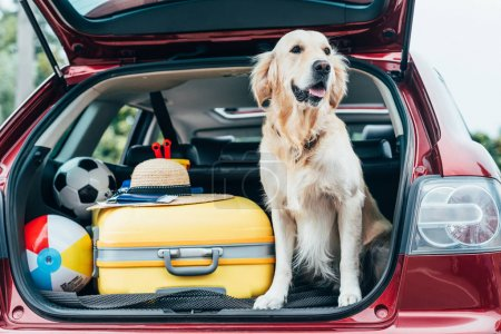 dog sitting in car trunk with luggage