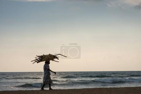 Photo for SRI LANKA - OCTOBER 26, 2017: old woman walking by seashore while carrying sticks on head - Royalty Free Image