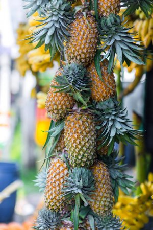 Photo for Delicious fresh pineapples hanging on market - Royalty Free Image
