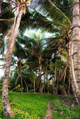 palm trees in rainforest