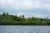 rainforest over river bank