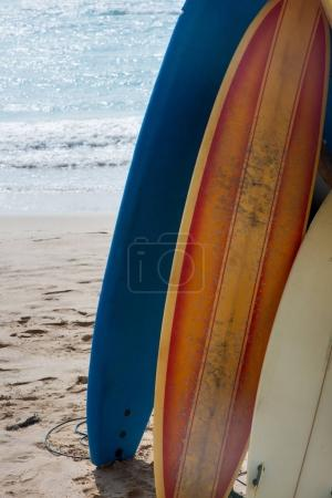 surfboards standing in row on beach