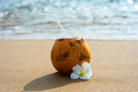 Photo for Cocktail in coconut on sandy beach with flower - Royalty Free Image