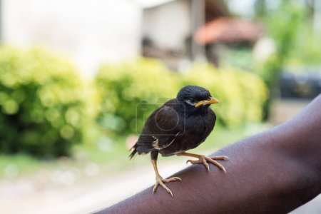black bird sitting on hand