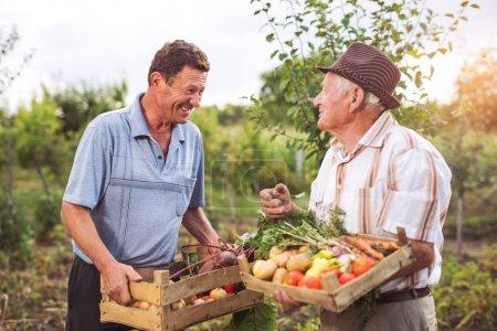 happy senior men with harvested vegetables in garden