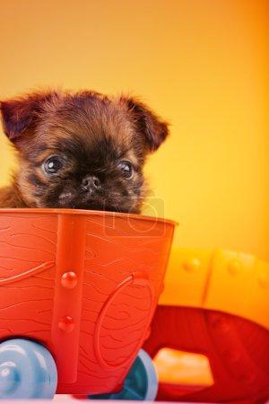 Photo pour Griffon chien en voiture en bois - image libre de droit