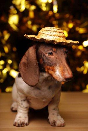 Dog portrait table gold bokeh...