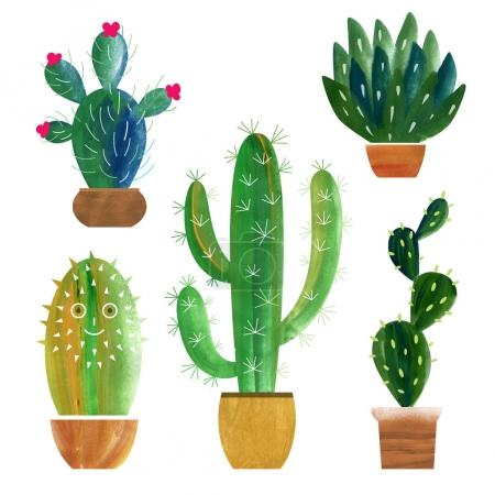 Set of different cactuses in pots