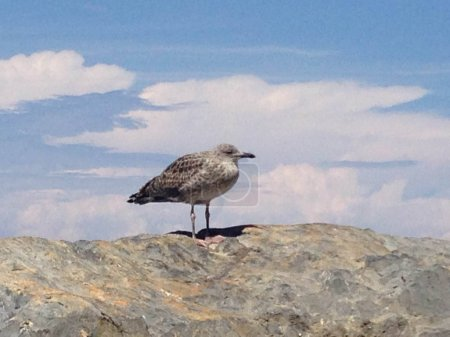 A seagull on the rock searches the horizon