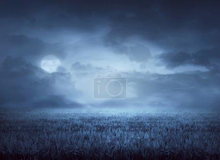 Photo pour Le brouillard entoure la prairie la nuit avec le clair de lune - image libre de droit
