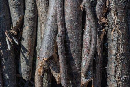 Photo pour Bois de cerisier pour la fabrication de meubles - image libre de droit