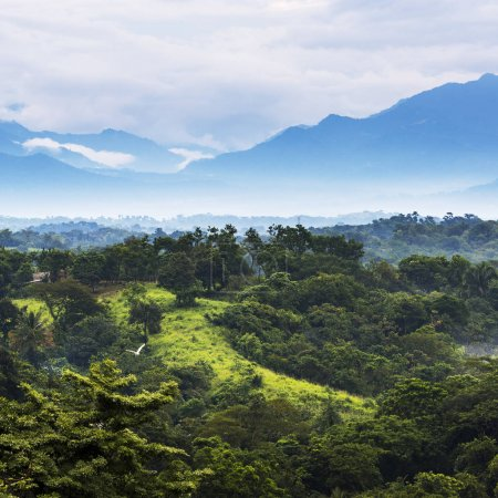Photo for Jungle landscape scenic with mountains on the horizon in Chiapas, Mexico - Royalty Free Image