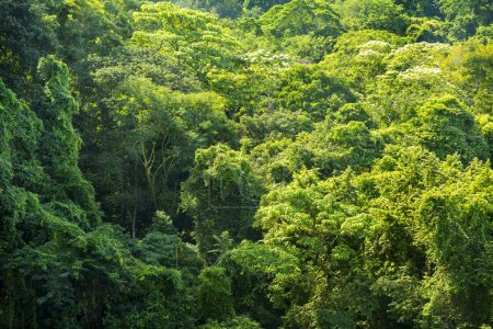Photo for Lush green forest foliage as a nature background - Royalty Free Image