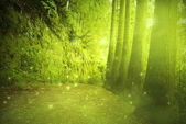 Beautiful view in a mysterious green forest with fairytale light