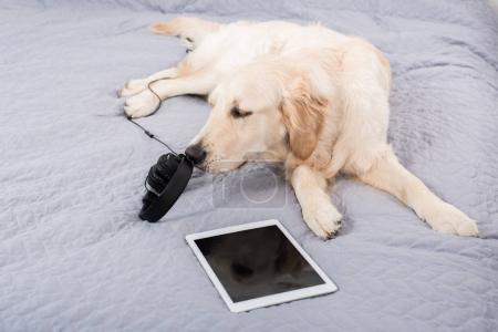 Dog with digital devices