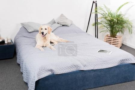 dog with digital tablet