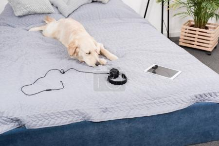 dog with headphones and digital tablet