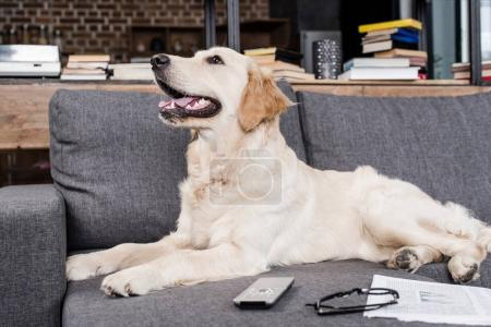 Dog with remote control