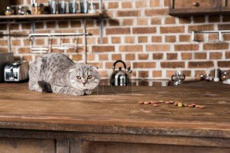 Grey scottish fold cat lying on wooden tabletop wi...