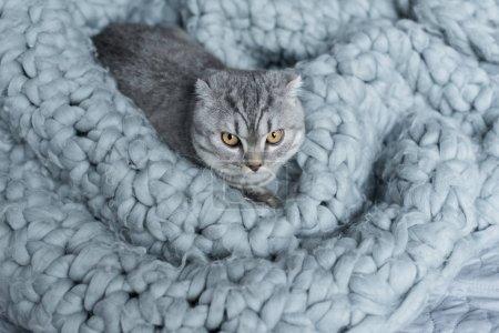 Cat on wool blanket