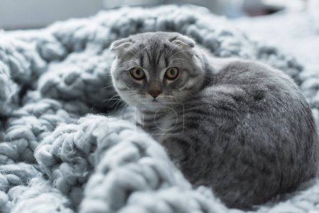 cat on wool blanket