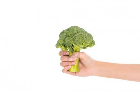 close-up partial view of female hand holding fresh organic broccoli isolated on white
