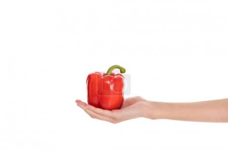 cropped shot of woman holding bell pepper in hand isolated on white