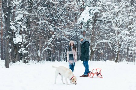 couple with sledge walking in winter park together with labrador dog