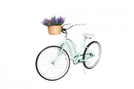 close up view of retro bicycle with basket full of lavender flowers isolated on white