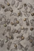 top view of quail eggs and feathers on concrete surface