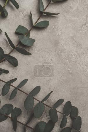 top view of green eucalyptus leaves on concrete surface
