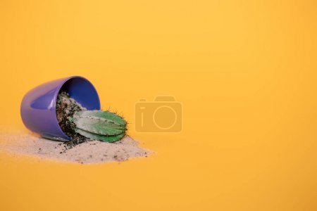close-up view of cactus in blue pot with soil and sand on yellow