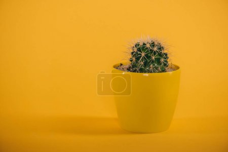 Photo for Beautiful green cactus with thorns in yellow pot on yellow - Royalty Free Image