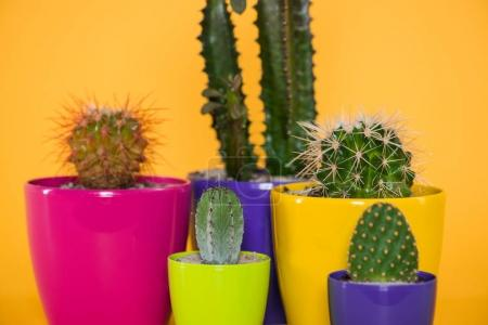 close-up view of beautiful various green succulents in colorful pots isolated on yellow
