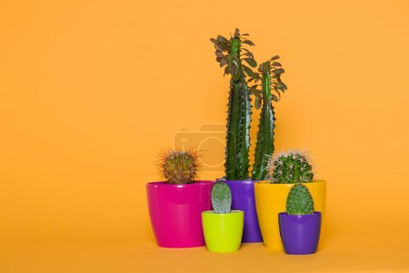 beautiful various green cactuses in colorful pots isolated on yellow