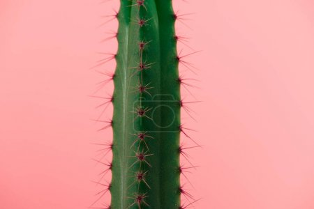 Photo for Close-up view of beautiful green cactus with thorns isolated on pink - Royalty Free Image