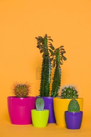 beautiful green cactuses in colorful pots isolated on yellow
