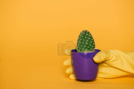 close-up partial view of human hand in glove holding pot with cactus isolated on yellow