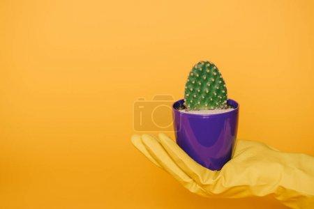 recadrée tir d'homme de main dans la main tenue faitout avec cactus isolé jaune