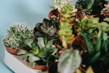 selective focus of various beautiful green succulents in pots on grey