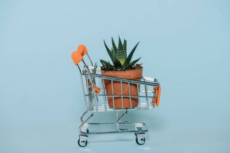 close-up view of small shopping trolley with green aloe plant in pot on grey