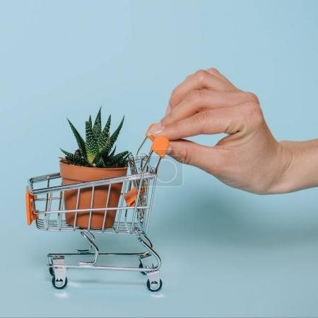 cropped shot of hand holding small shopping cart with aloe plant on grey