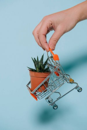 cropped shot of human hand holding shopping trolley with succulent in pot on grey