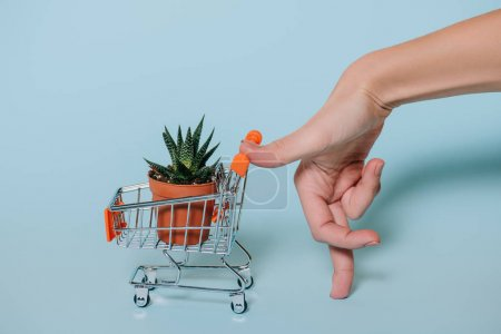 close-up partial view of human hand and shopping trolley with succulent in pot on grey