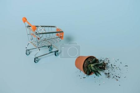 succulent in pot with soil and empty shopping trolley on grey