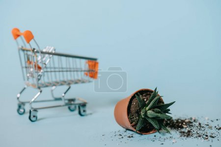 close-up view of succulent in pot with soil and empty shopping trolley on grey