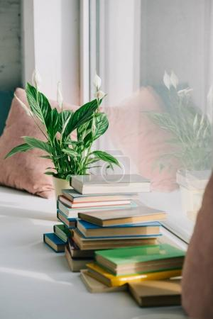 potted plant and books on windowsill